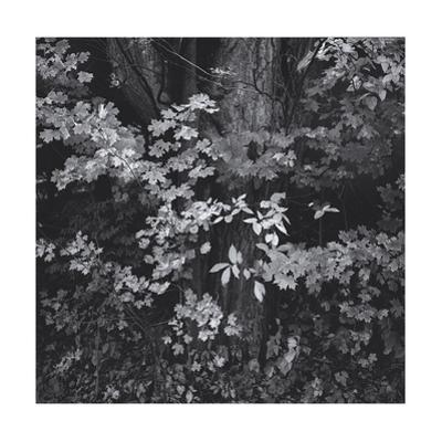 Forest Foliage Leaves by Henri Silberman