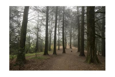 Forest Path Trees Dog