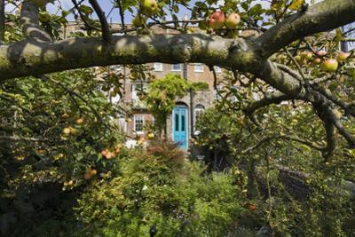 Garden with Apple Tree and Blue Door