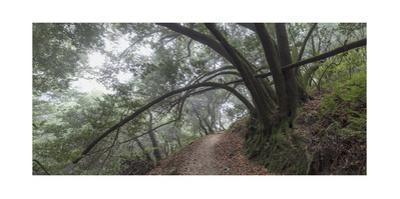 Golden Spike Trail, Redwood Regional Park, CA Landscape (Northern California Forest)