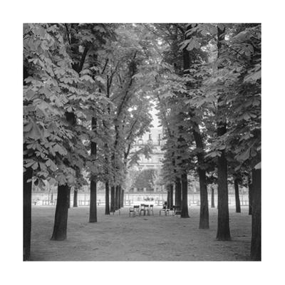 Jardin Luxembourg, Paris. Trees, Chairs by Henri Silberman