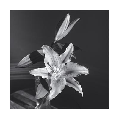Lily Flower in Vase by Henri Silberman