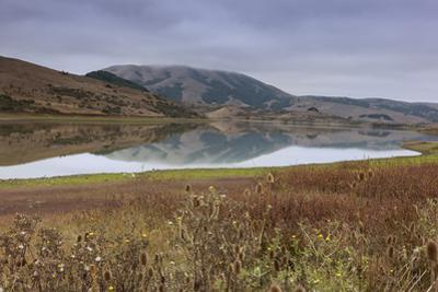 Marin County Landscape in Fall by Henri Silberman