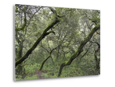 Moss on Tree, Northern California Woods 2 (Native Woodland) by Henri Silberman