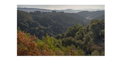 Oakland Hills, Autimn Moring by Henri Silberman