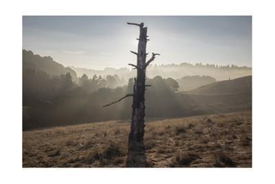 Oakland Hills, Sunrise 2, Serpentine Prarie by Henri Silberman