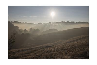 Oakland Hills, Sunrise, Serpentie Prarie by Henri Silberman
