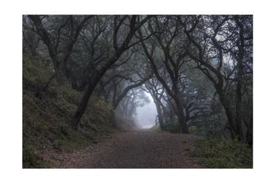 Oakland Leona Park Tree Canopy by Henri Silberman