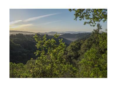 Oakland Redwood Park, East View Morning Sun by Henri Silberman