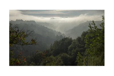 Oakland Redwood Park, East View Sunrise Valley Fog Panorama by Henri Silberman