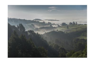 Oakland Redwood Park, East View Sunrise Valley Fog by Henri Silberman