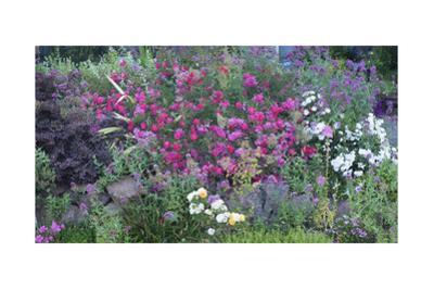 Oakland Spring Garden by Henri Silberman