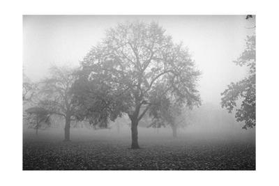 Owl'S Head Park Trees Fog 2 by Henri Silberman