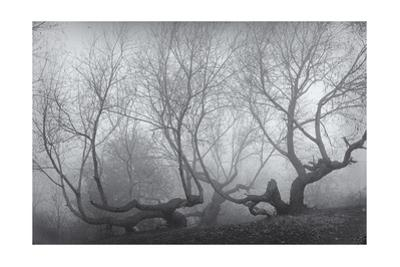 Owl'S Head Park Trees Fog by Henri Silberman