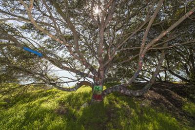 Painted Tree, Albany Bulb (Graffiti, Branches) by Henri Silberman
