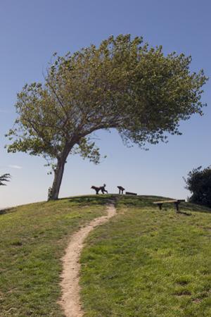 Point Isabel, CA (Dog Park) by Henri Silberman