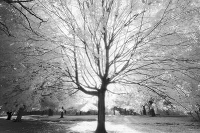 Prospect Park Infrared Tree - Brooklyn Park in Fall by Henri Silberman