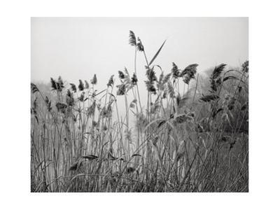 Prospect Park Lake With Grasses - Botanical Landscape Brooklyn by Henri Silberman