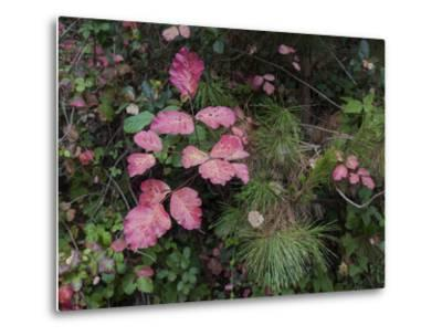 Red Leaves Poison Oak (Fall Botanical) by Henri Silberman