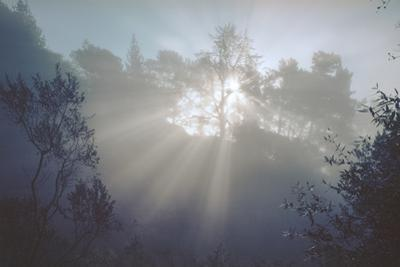 Sunrise, Oakland Hills by Henri Silberman