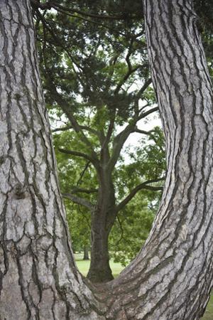 Tree Framed by a Tree Trunk, Vertical by Henri Silberman