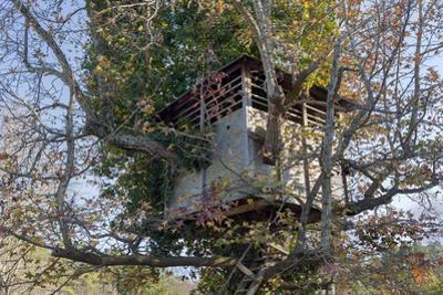 Tree House in Autumn (Chapel Hill, NC) by Henri Silberman