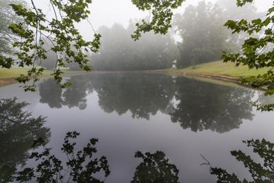 Trees and Branches Reflecting in a Pond on a Foggy Morning by Henri Silberman