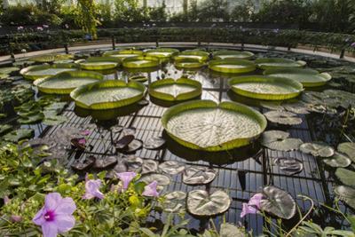 Water Lily Pond, Kew Gardens 2 (Green House Lily Pond, England) by Henri Silberman