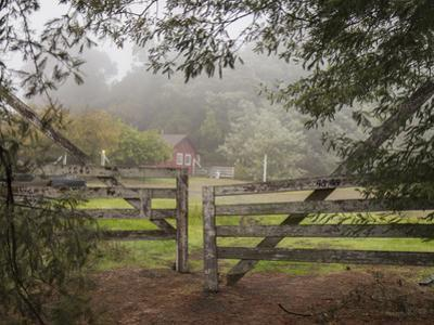 Wooden Gate to Ranch (Fog in Morning, Oakland, CA) by Henri Silberman