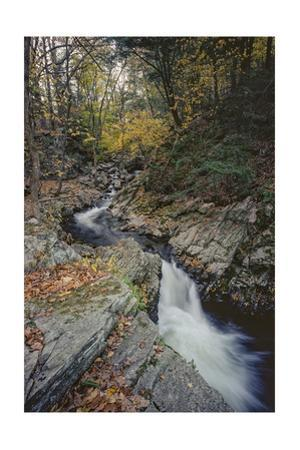 Woodland Stream Autumn Leaves