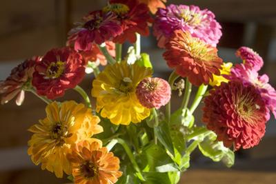 Zinnias, Close-Up (Still Life with Flowers) by Henri Silberman