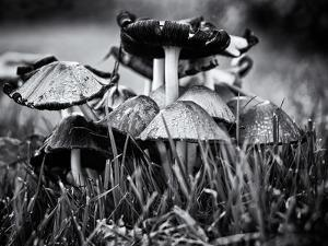 A Close-Up of Small Mushroom in the Grass by Henriette Lund Mackey