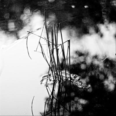 Straws Sticking Up from the Water in a River with Spiders Web by Henriette Lund Mackey
