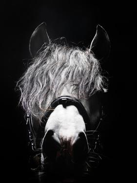 Frontal Head Portrait of Grey Horse by Henrik Sorensen