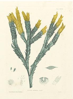 Luminous Seaweed I by Henry Bradbury