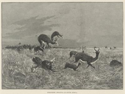 Springbok-Shooting in South Africa by Henry Charles Seppings Wright