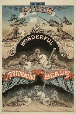 George Pike's Performing Seals by Henry Evanion