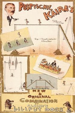 "Pospischil Kaira's ""Lilliput Dogs"" by Henry Evanion"