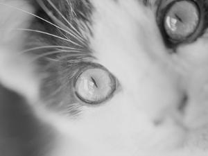 Cat's Eyes by Henry Horenstein