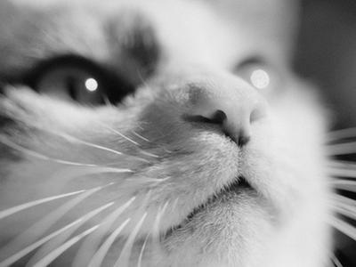 Close-up of Cat's Face by Henry Horenstein