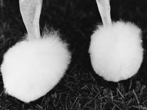 Legs of Groomed Poodle by Henry Horenstein