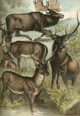 Deer and Elk by Henry J^ Johnson