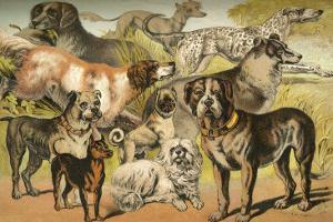 Dog Breeds II by Henry J^ Johnson