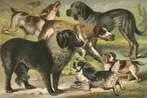 Dog Breeds III by Henry J^ Johnson
