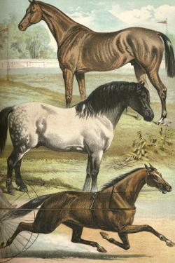 Horse Breeds I by Henry J^ Johnson