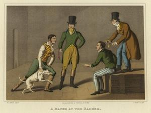 A Match at the Badger by Henry Thomas Alken