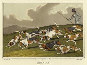 Beagles by Henry Thomas Alken