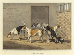 Fox Hounds by Henry Thomas Alken