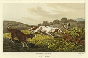 Setters by Henry Thomas Alken
