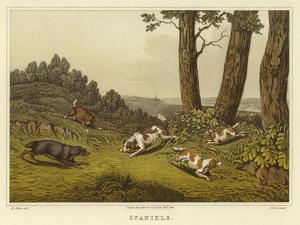 Spaniels by Henry Thomas Alken